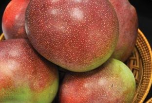 more mangos